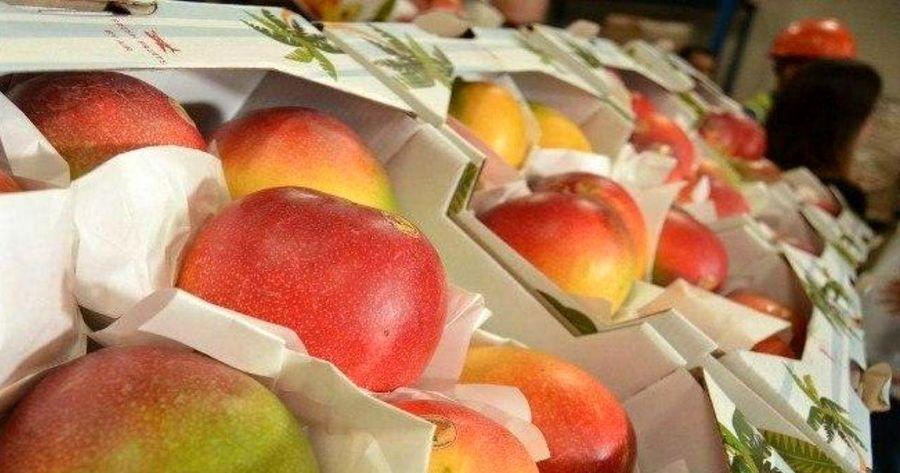 پزِ واردات دو میوه لوکس را میدهند!
