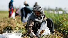 بیکاری، کشاورزان را به دستفروشی و اعتیاد کشانده، کشاورزی که فریاد مطالبهگری سر دهد، برچسب اغتشاشگری میخورد!