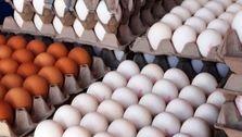 سوء مدیریت ها تمامی ندارد؛ قیمت تخم مرغ به شانهای ۴۵ هزار تومان پر کشید!