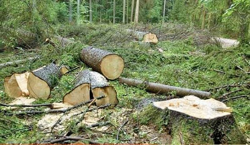 یک کارشناس محیط زیست: ۸۰ درصد جنگلها و منابع طبیعی ایران نابود شده / نیمی از این نابودیها در سی سال گذشته رخ داده