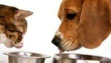 صاحبان حیوانات خانگی و دام های صنعتی بخوانند