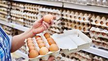 هر شانه تخممرغ چقدر گران شد؟