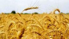 تورم ۷۰ درصدی شاخص قیمت تولید کننده بخش های زراعی و دامداری