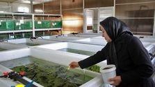 کاهش حوادث ناشی از کار با شغلهای سبز
