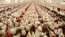 تنظیم بازار باید به وزارت کشاورزی سپرده شود