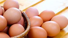 افزایش قیمت تخم مرغ به هیچ وجه قابل قبول نیست