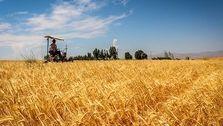 افزایش قیمت جهانی گندم، ذرت و دانههای روغنی